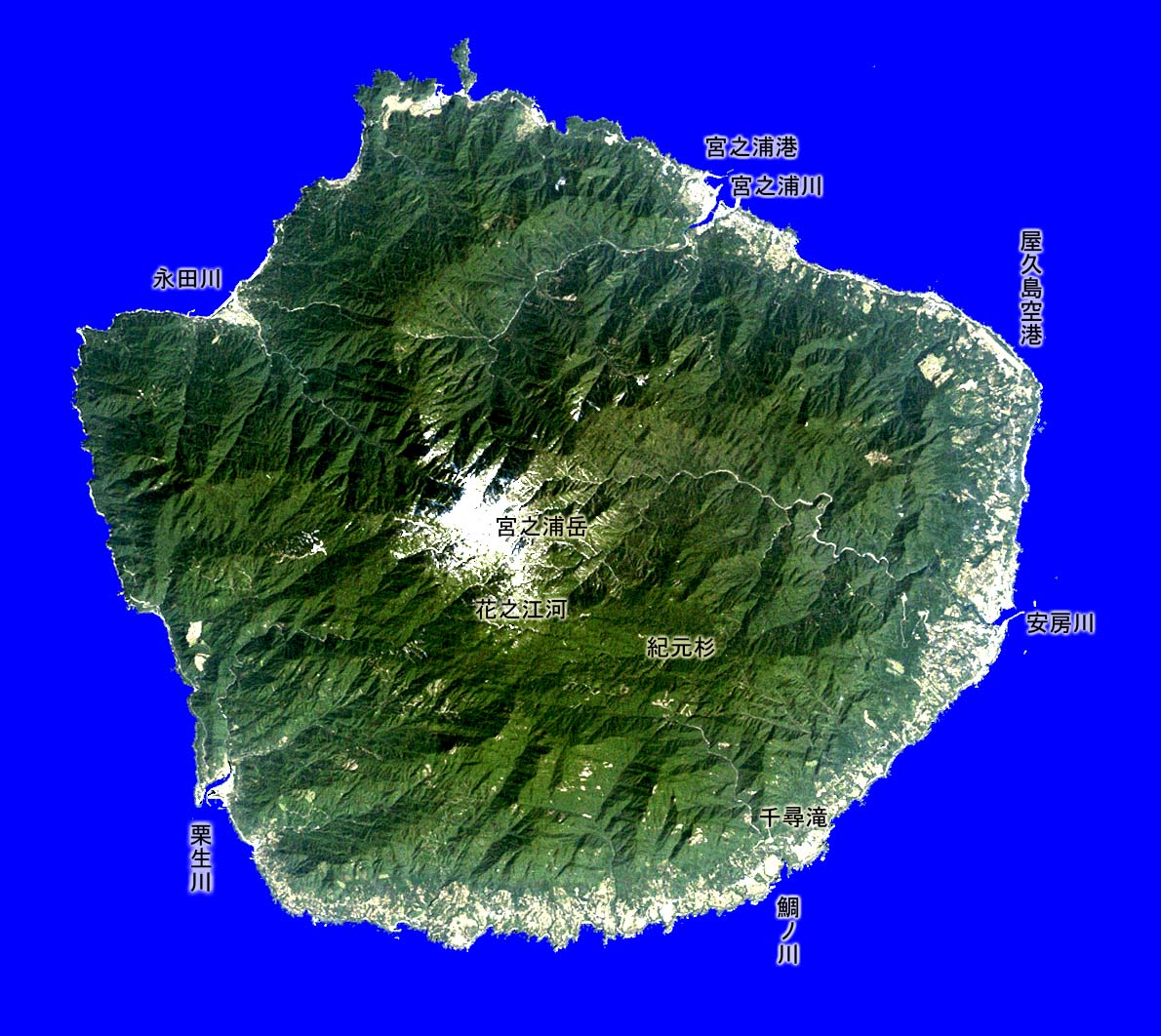 屋久島の画像 p1_35